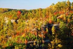De herfst in de Hooglanden Stock Fotografie