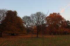 De herfst in Hyde Park, Londen stock afbeelding