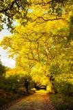 De herfst in Ierland Royalty-vrije Stock Foto's