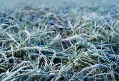 De herfst, ijzig gras in ochtend stock afbeelding