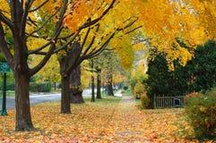 De herfst in Illinois Stock Afbeeldingen