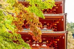 De herfst in Japan Royalty-vrije Stock Foto's
