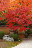 De herfst in Japan Royalty-vrije Stock Fotografie