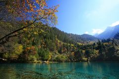 De herfst in Jiuzhaigou Stock Afbeeldingen