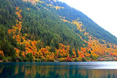 De herfst in Jiuzhaigou, Sichuan, China Royalty-vrije Stock Fotografie