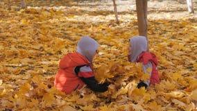 De herfst Kleine kinderen in de gele bladeren De kinderen spelen in de straat met gevallen bladeren De herfstbosje van berken en stock video