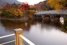 de herfst kleur Stock Foto