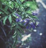 De herfst 'kleur Stock Foto's