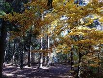 De herfst in de kleurenmeer van Polen stock foto
