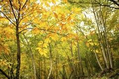 De herfst in kleurrijk bos stock foto's