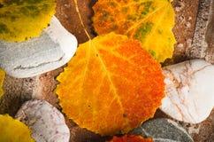 De herfst kleurrijke bladeren, achtergrond Royalty-vrije Stock Foto's