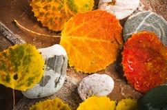 De herfst kleurrijke bladeren, achtergrond Royalty-vrije Stock Afbeeldingen