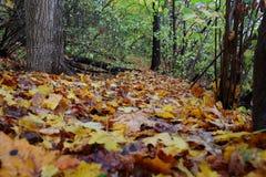 De herfst kleurrijke bladeren in het bos Stock Fotografie