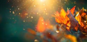 De herfst kleurrijke heldere bladeren die in een boom in herfstpark slingeren De kleurrijke achtergrond van de herfst stock foto's