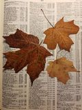 De herfst kleurt 9 royalty-vrije stock foto's