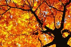 De herfst kleurt 9 stock afbeelding