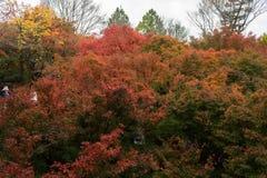 De herfst kleurt 9 Stock Afbeeldingen