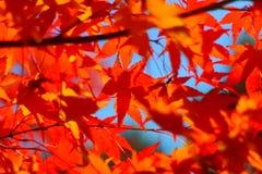 De herfst kleurt 9 Royalty-vrije Stock Foto