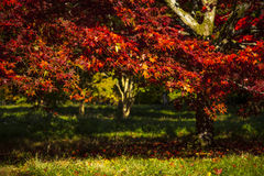De herfst kleurt 9 Stock Foto's