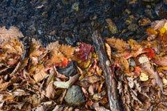 De herfst kleurt bladeren en water Stock Foto