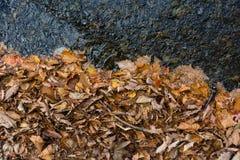 De herfst kleurt bladeren en water en zuiverheid Stock Foto