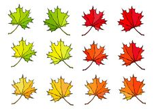 De herfst kleurt 9 Canadees Dagsymbool De herfst of Dalingsoogstinzameling Realistische Hand Getrokken Hoogte - kwaliteits Vector stock illustratie