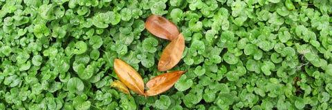 De herfst komt Royalty-vrije Stock Foto