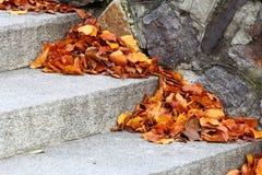 De herfst komt royalty-vrije stock afbeeldingen