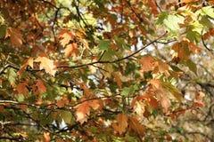 De herfst komt Stock Afbeeldingen