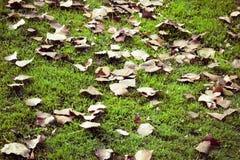 De herfst komt Stock Afbeelding
