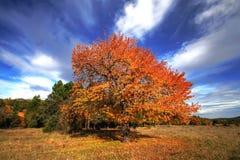 De herfst komt aan stock foto's