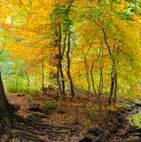 De herfst komt aan een bebost gebied in Central Park, NYC royalty-vrije stock afbeeldingen