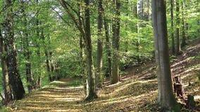 De herfst komt - dalende bladeren stock videobeelden