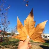 De herfst komt met één blad royalty-vrije stock afbeelding