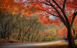 De herfst in Korea Stock Afbeeldingen