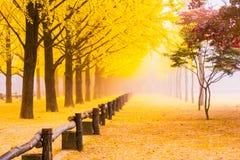 De herfst in Korea Nami Island, Seoel Korea stock foto's