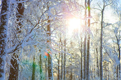 De herfst Koud weer Stock Afbeelding