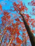 De herfst kwam aan Stock Foto