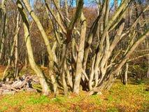 De herfst kwam aan Royalty-vrije Stock Afbeeldingen