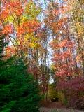 De herfst kwam aan Stock Fotografie