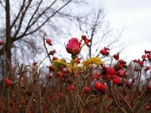 De herfst laatste bloem Royalty-vrije Stock Foto