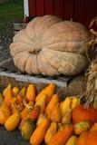 De herfst in Landelijk Maine Stock Foto's