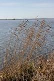 De herfst lang gras op de banken van Meer Pleshcheyevo Royalty-vrije Stock Afbeeldingen