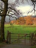 De herfst in Langdale Stock Afbeelding