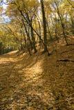 De herfst langs de Rivier van de Mississippi in Minneapolis Stock Foto