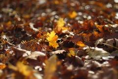 De herfst Leafes Stock Foto