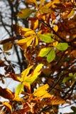 De herfst Leafes Royalty-vrije Stock Afbeeldingen