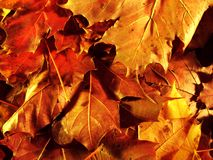 De herfst leaves2 stock foto