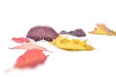 De herfst leavs Royalty-vrije Stock Foto