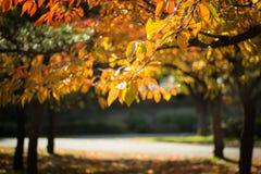 De herfst in liefde Stock Fotografie